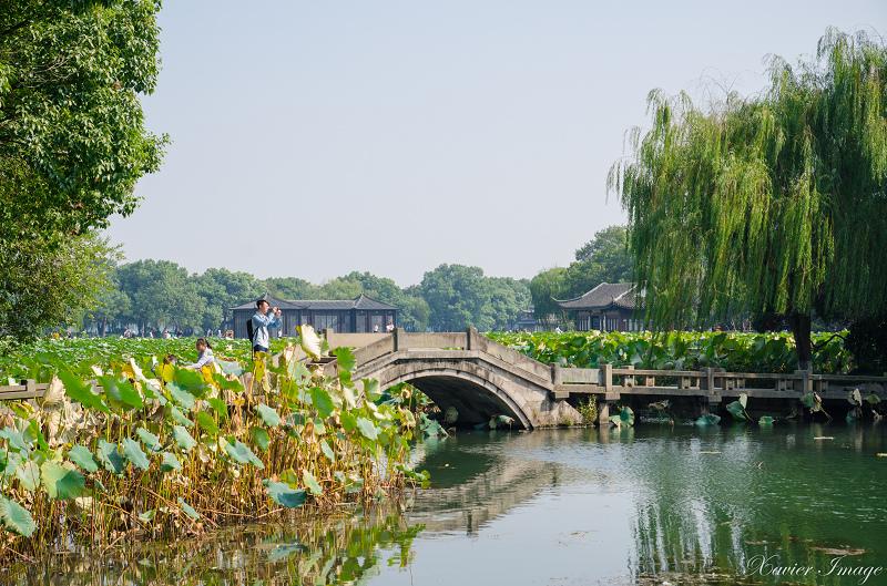 杭州西湖十景_曲院風荷 11