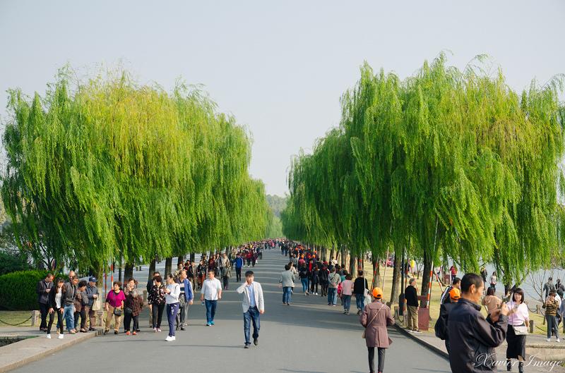 杭州西湖_白堤_柳樹 3
