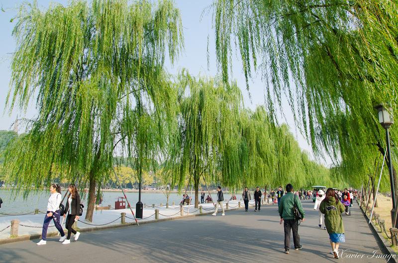 杭州西湖_白堤_柳樹 2