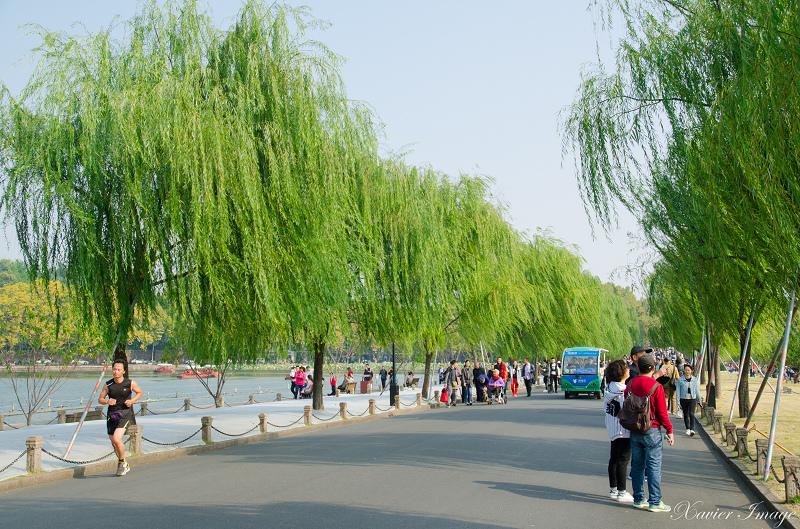 杭州西湖_白堤_柳樹