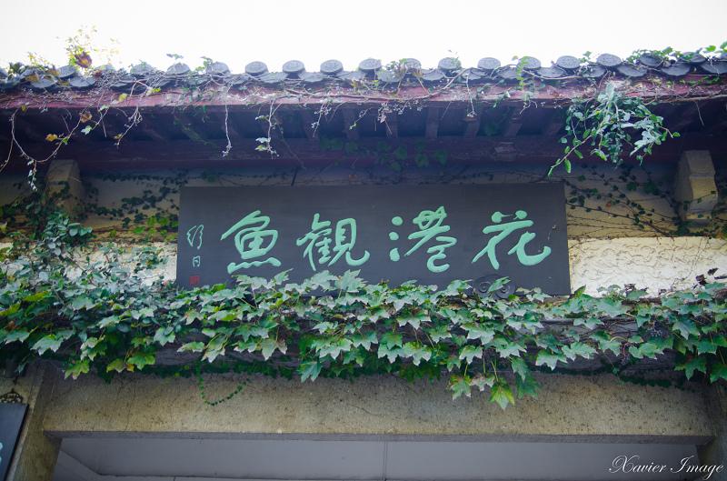 杭州西湖十景_花港觀魚