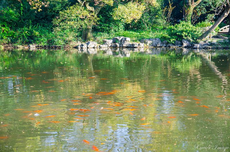 杭州西湖十景_花港觀魚_紅魚池 2