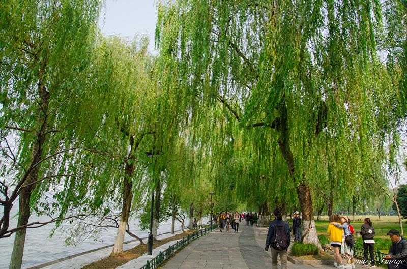 杭州西湖十景_柳浪聞鶯