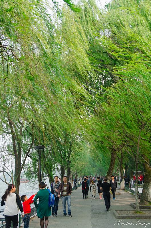 杭州西湖十景_柳浪聞鶯 7