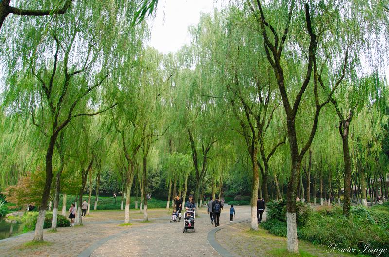 杭州西湖十景_柳浪聞鶯 8