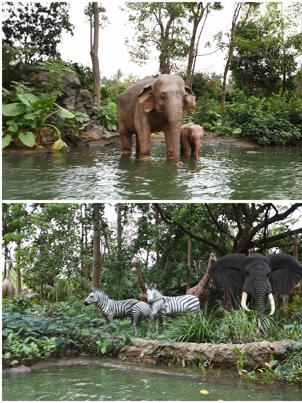 香港迪士尼樂園_探險世界_森林河流之旅