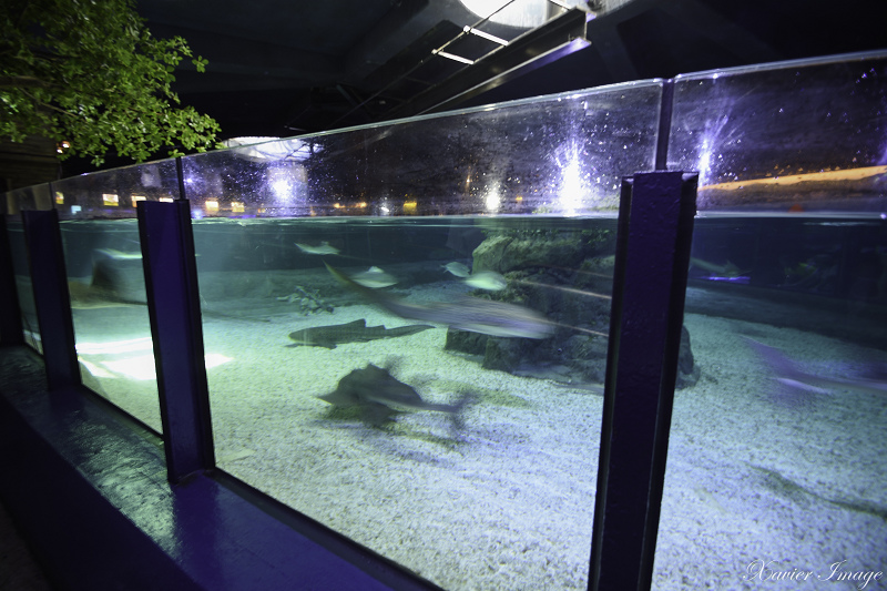香港海洋公園_尋鯊探秘 4