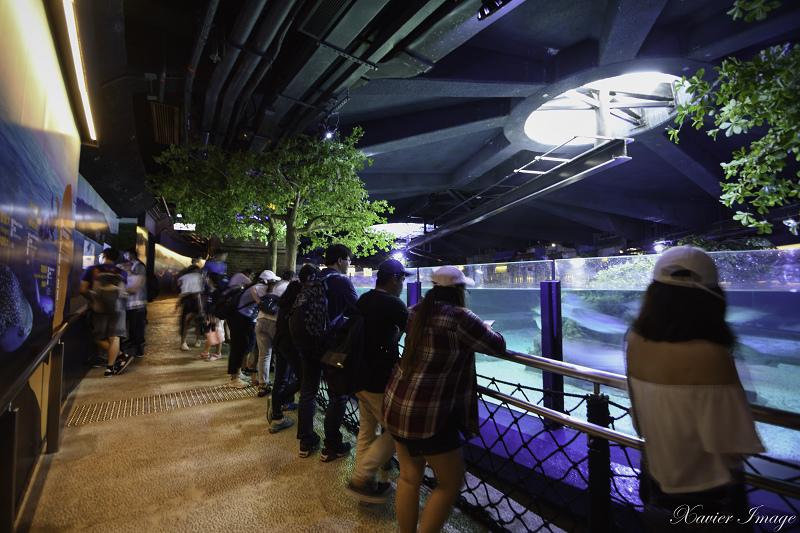 香港海洋公園_尋鯊探秘 5