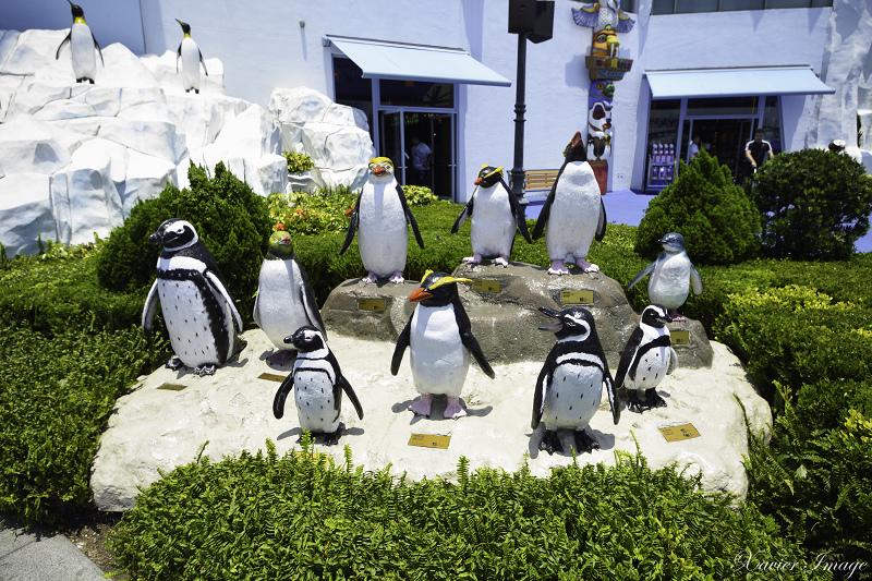 香港海洋公園_南極奇觀