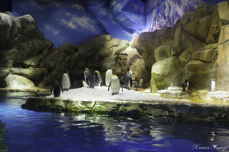 香港海洋公園_南極奇觀 5