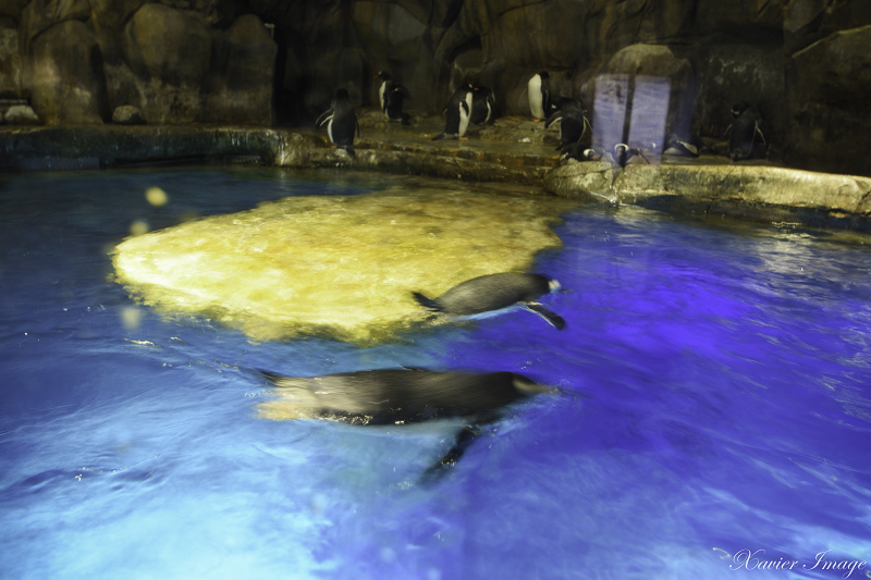 香港海洋公園_南極奇觀 6