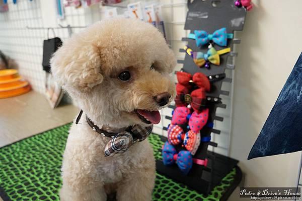 澎湖商家-犬宇宙寵物pedro0361.jpg