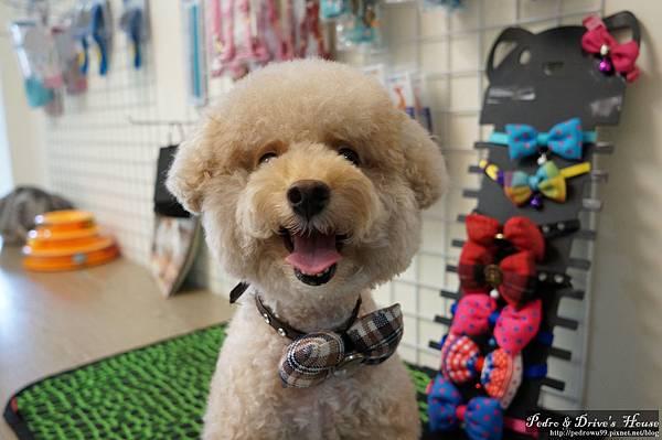 澎湖商家-犬宇宙寵物pedro0363.jpg