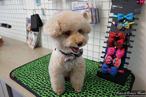 澎湖商家-犬宇宙寵物pedro0364.jpg