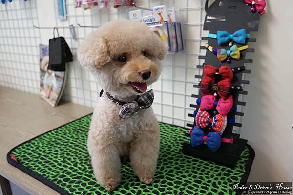 澎湖商家-犬宇宙寵物pedro0365.jpg