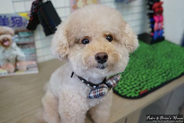 澎湖商家-犬宇宙寵物pedro0367.jpg