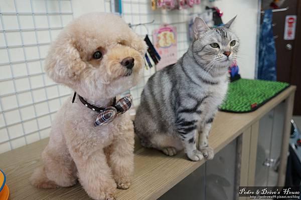 澎湖商家-犬宇宙寵物pedro0370.jpg