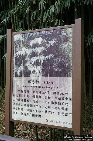 台灣旅遊pedro0339.jpg