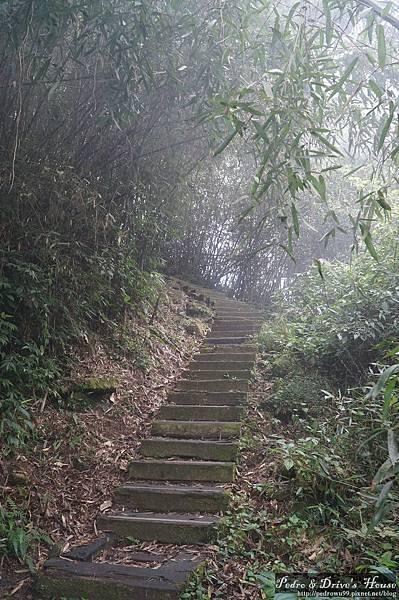 台灣旅遊pedro0356.jpg