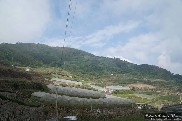 台灣旅遊pedro0361.jpg
