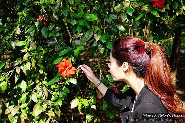 澎湖旅遊-pedro-0152.jpg
