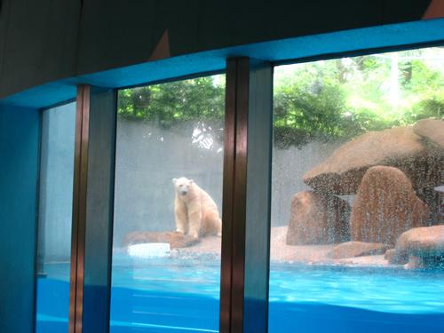 20070916 新加坡動物園-北極熊