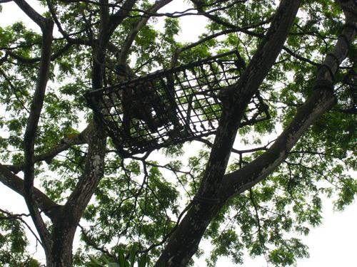 20070916 新加坡動物園-紅毛猩猩舖床