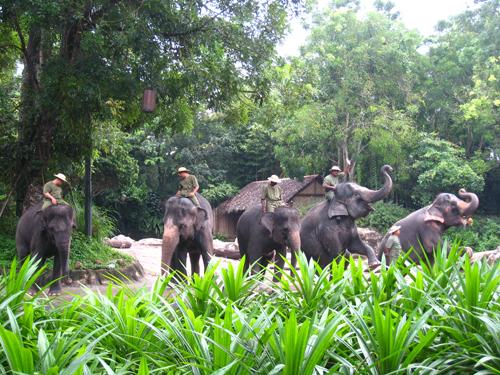 20070916 新加坡動物園-大象秀