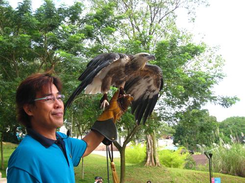 20070917 聖淘沙動物樂園-老鷹
