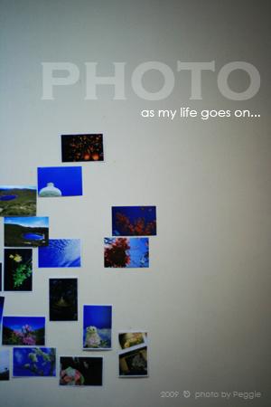 貼在牆上了,照片們