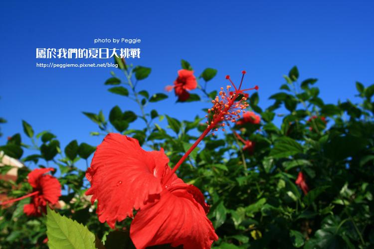 Day15-花