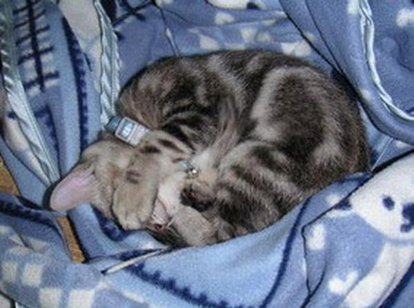 從小就愛睡覺