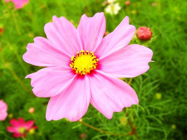 2009新社花海節018.jpg