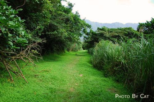 前往鷹仔嘴的綠色草坪.jpg