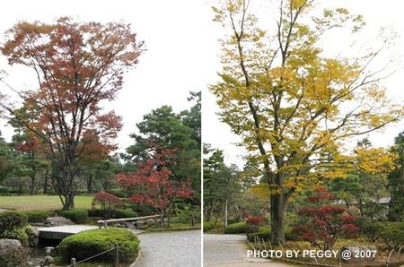 color trees.jpg