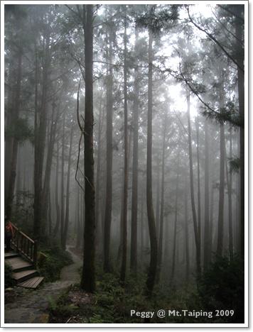 懷舊步道-起霧了