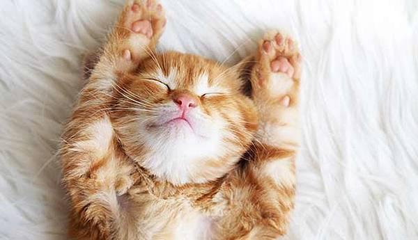 貓咪.jpg