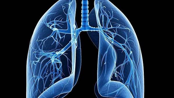 肺部.jpg