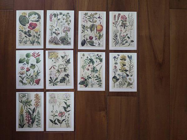尼森植物片