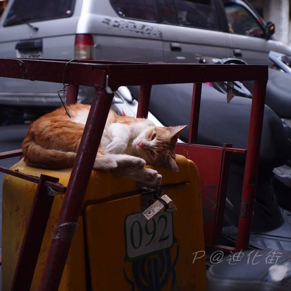 在迪化街遇見的小貓