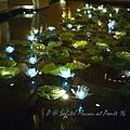 澳門十六浦索菲特大酒店 -- 套房樓層中的「荷花池」