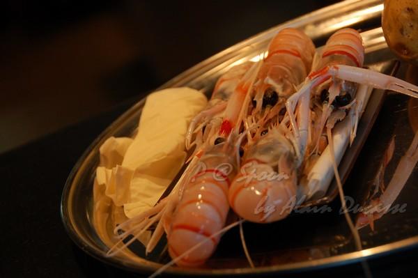 六月 -- 小螯蝦 (1)
