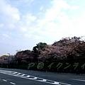 インクライン (蹴上鐵道遺跡) -- 櫻花 (1)