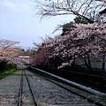 インクライン (蹴上鐵道遺跡) -- 櫻花 (2)