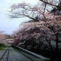 インクライン (蹴上鐵道遺跡) -- 櫻花 (3)