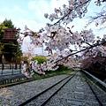 インクライン (蹴上鐵道遺跡) -- 櫻花 (4)
