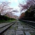インクライン (蹴上鐵道遺跡) -- 櫻花 (6)