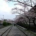 インクライン (蹴上鐵道遺跡) -- 櫻花 (9)