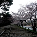 インクライン (蹴上鐵道遺跡) -- 櫻花 (10)