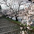 インクライン (蹴上鐵道遺跡) -- 櫻花 (12)
